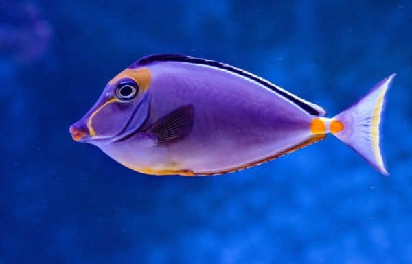 dreaming with fish meaning