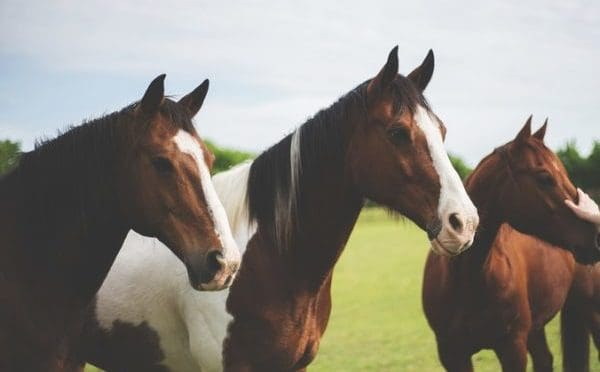 dreaming with horse meaning
