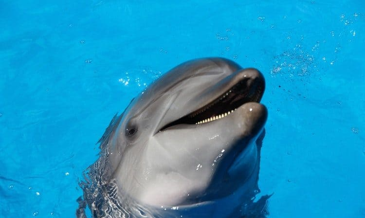 dream with happy dolphin